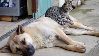 gato y perro 326x183 - Formas interesantes de recaudar fondos para refugios para animales